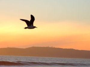 evening bird